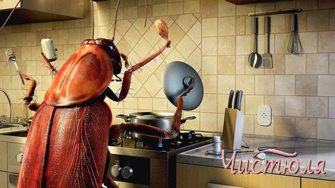 Как вести борьбу с тараканами?