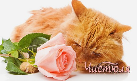 Как устранить едкий запах кошачьей мочи?