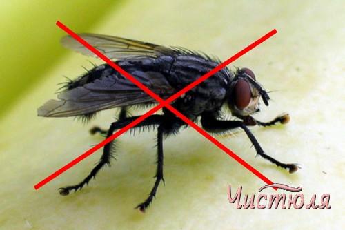 Мухам бой, или Как избавиться от летающих насекомых?
