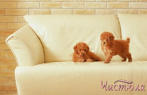 Рыжие собаки на светлом диване