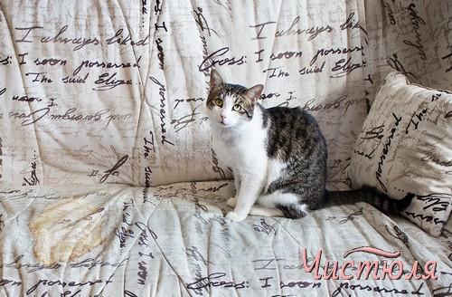 Кот оставил лужу на мягкой мебели